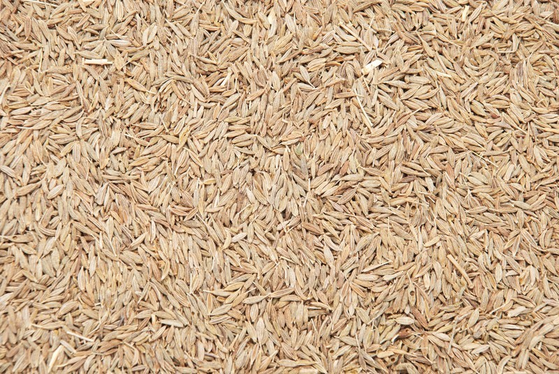 Cumin Seeds 14 oz