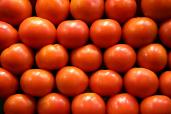 Tomatoes $ 1.99/lb